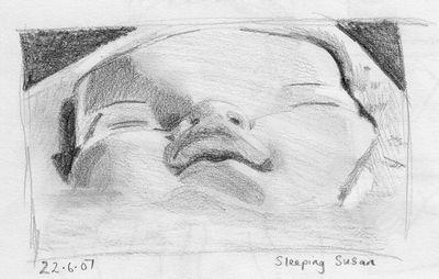 sleeping susan