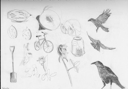 doll and crow studies 3